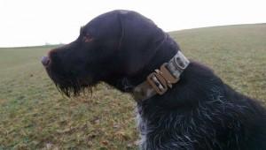 Hundehalsband 2