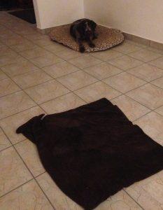 Welpe auf Decke