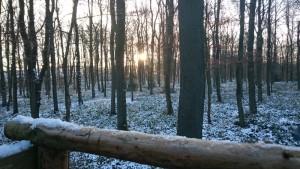 Ein Morgen in der Eifel
