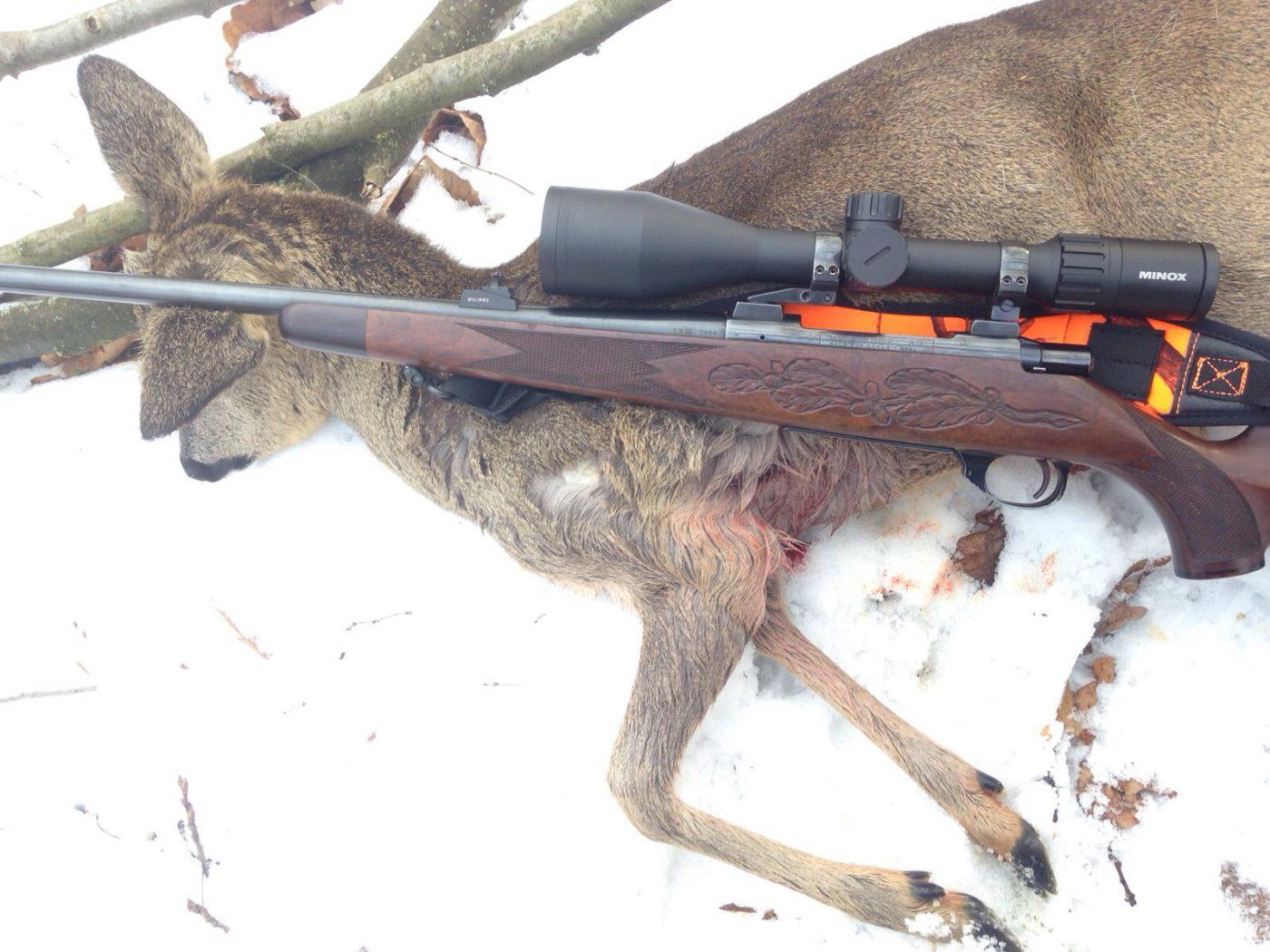 Projekt jungjäger sucht jagdbüchse u rws typ mit minox zx i